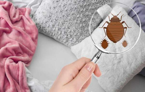 How to Prevent Bed Bugs?