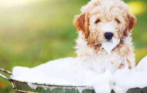 HYGIENE OF YOUR PET DOES AND DONTS